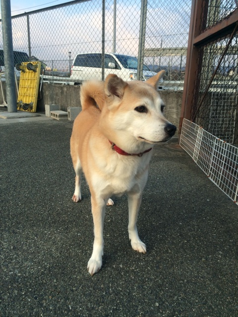 f:id:japanrescue1995:20140121201616j:plain