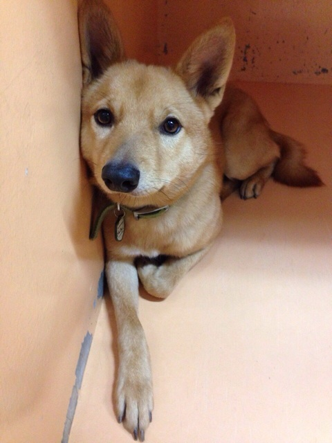 f:id:japanrescue1995:20140202211747j:plain
