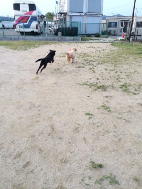f:id:japanrescue1995:20140525202436j:plain