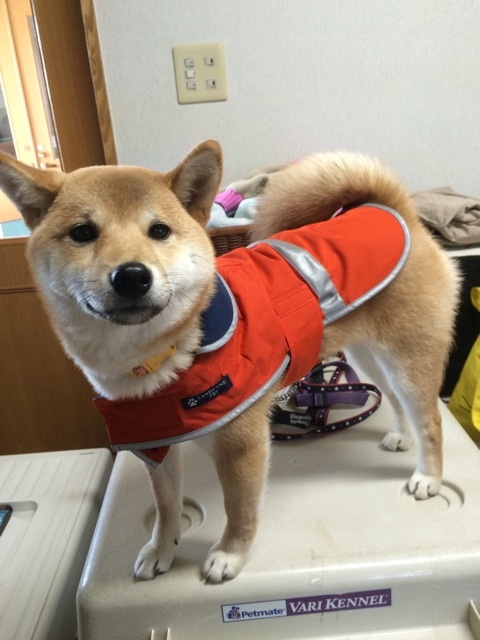 f:id:japanrescue1995:20150313205018j:plain