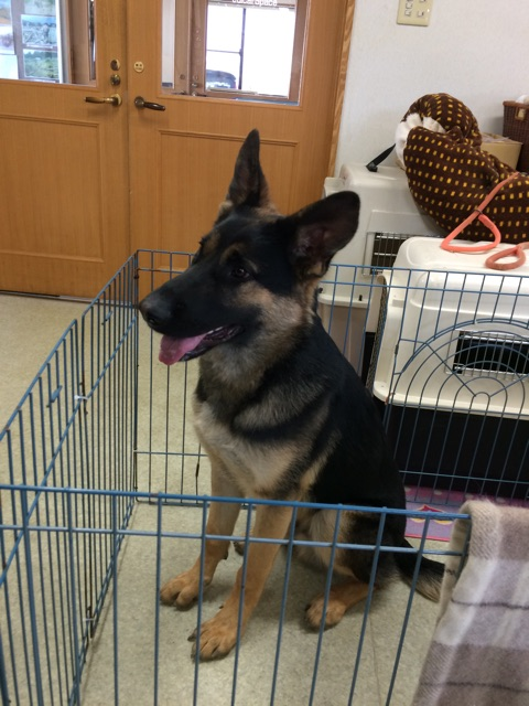 f:id:japanrescue1995:20150321100752j:plain