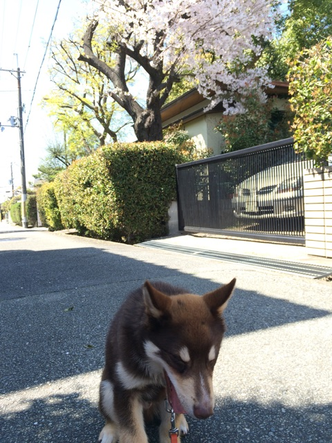f:id:japanrescue1995:20150403121843j:plain