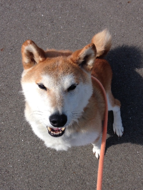 f:id:japanrescue1995:20151008105048j:plain