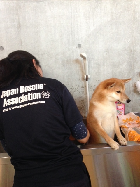 f:id:japanrescue1995:20151016150341j:plain