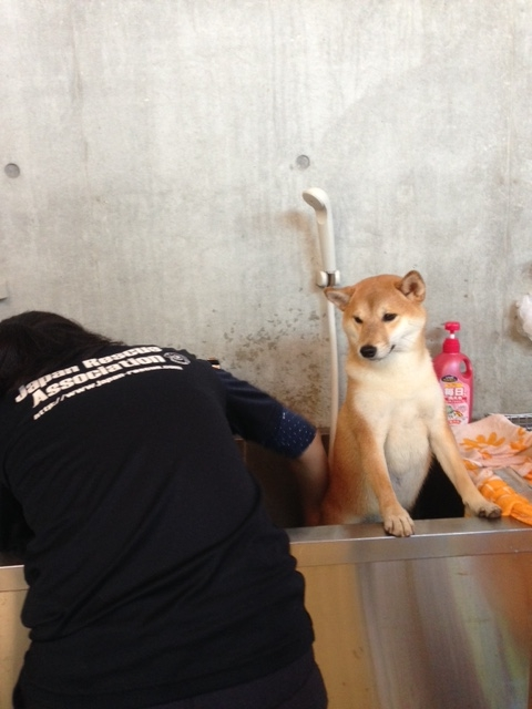 f:id:japanrescue1995:20151016150350j:plain