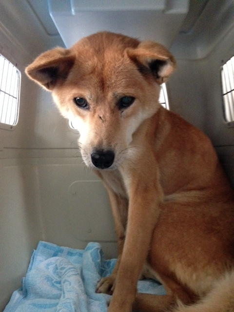 f:id:japanrescue1995:20151109135119j:plain