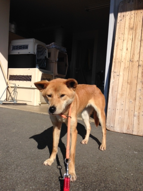 f:id:japanrescue1995:20151112134401j:plain