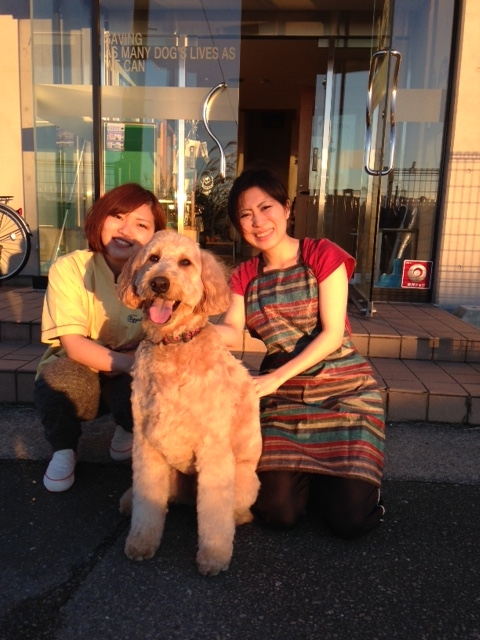 f:id:japanrescue1995:20151115163542j:plain