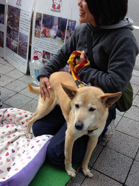 f:id:japanrescue1995:20160228122548j:plain