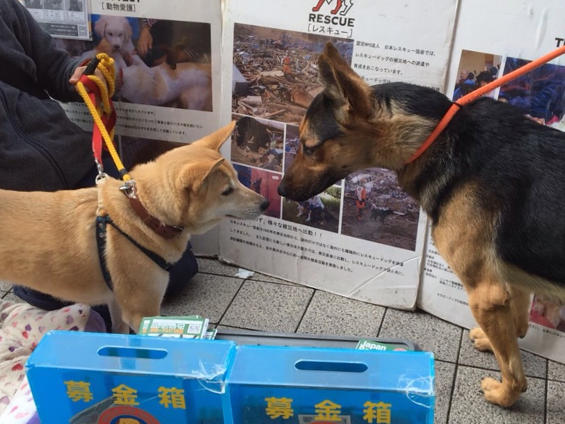 f:id:japanrescue1995:20160228193022j:plain