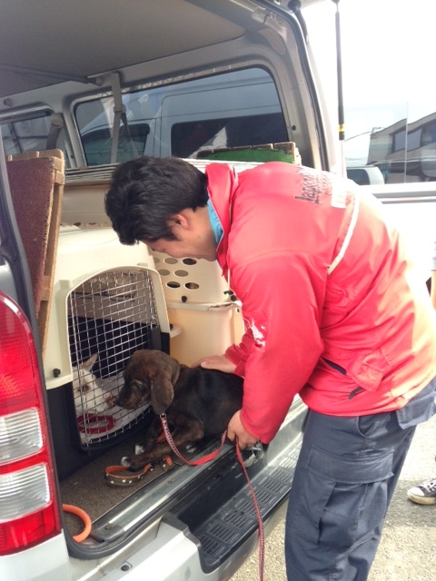 f:id:japanrescue1995:20160306103651j:plain