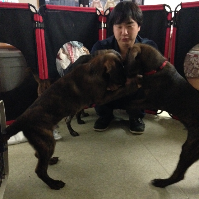 f:id:japanrescue1995:20160314101646j:plain