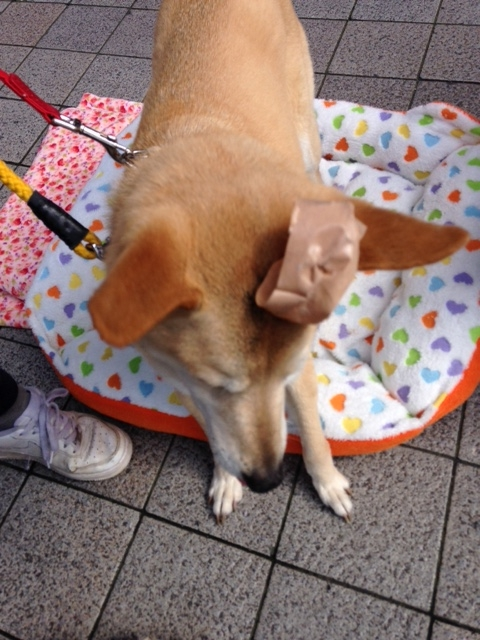 f:id:japanrescue1995:20160320143144j:plain