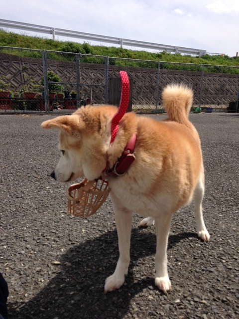f:id:japanrescue1995:20160422140242j:plain