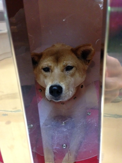f:id:japanrescue1995:20160521191526j:plain