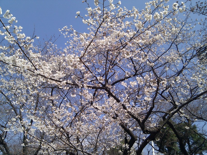 f:id:kei-an:20120401132321j:plain