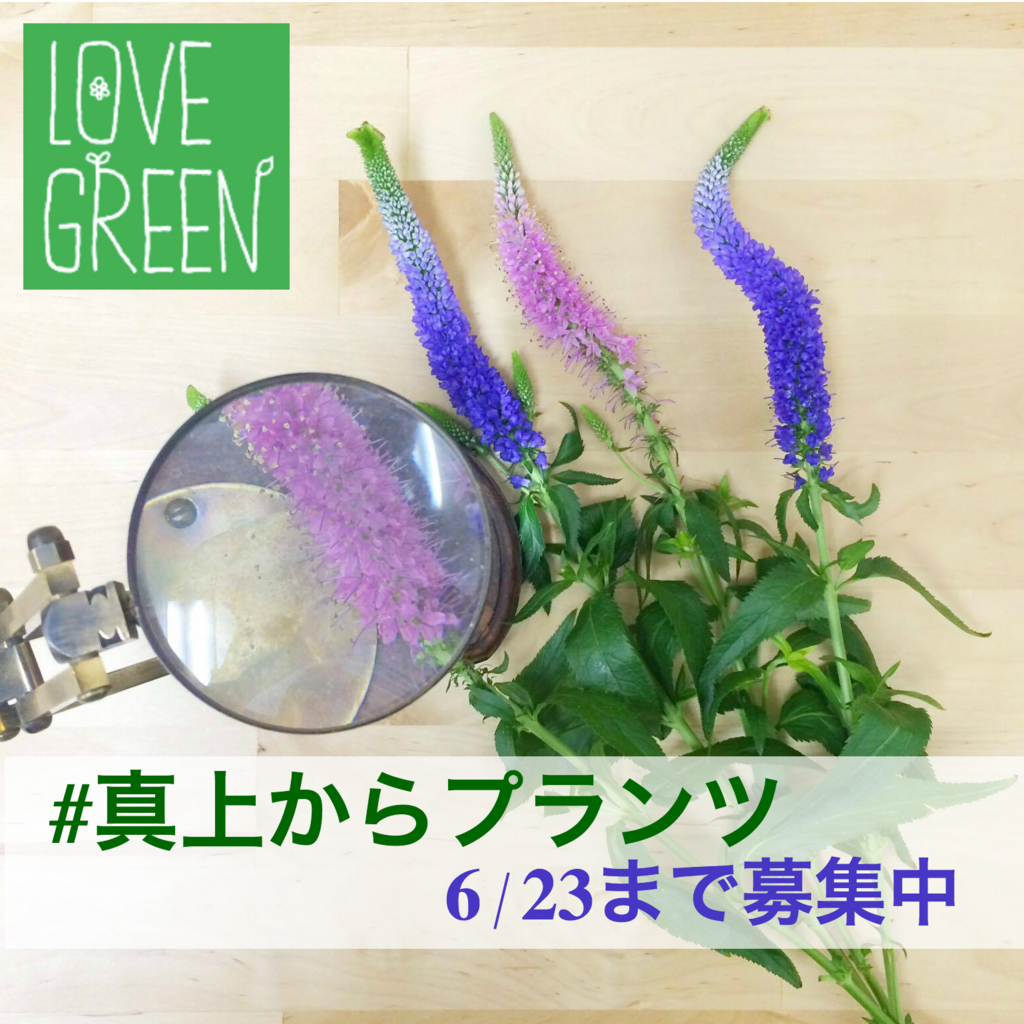 f:id:lovegreen_media:20160613110650j:plain