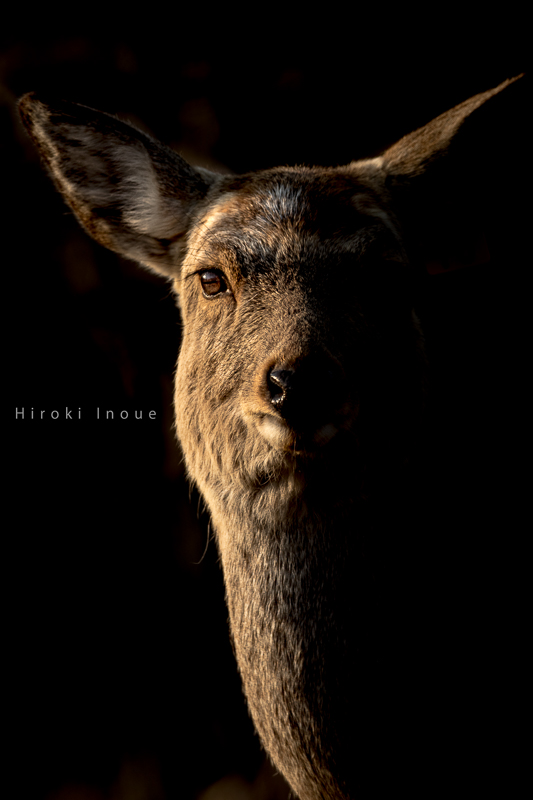 f:id:northern-island-colors:20160522060530j:plain
