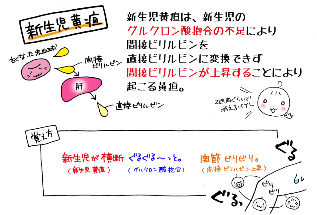Images of ビリルビン - JapaneseClass.jp