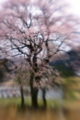 Cherry blossoms of  GOSYO     BY kzfe