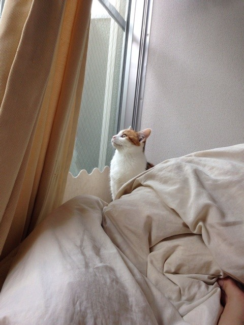 f:id:violet-cat:20140501174408j:plain