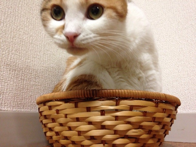 f:id:violet-cat:20140711221436j:plain