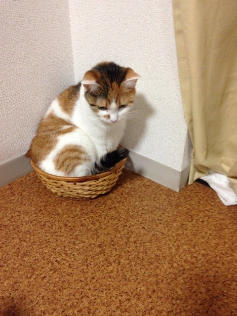 f:id:violet-cat:20140711221504j:plain