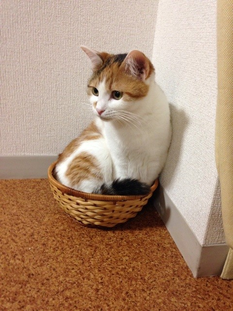 f:id:violet-cat:20140711221542j:plain