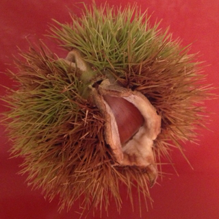 f:id:waxing-and-waning_moon:20131012131333j:plain