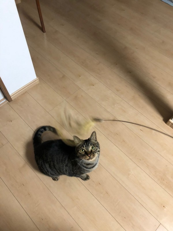 f:id:you_cats0712:20180420234045j:image