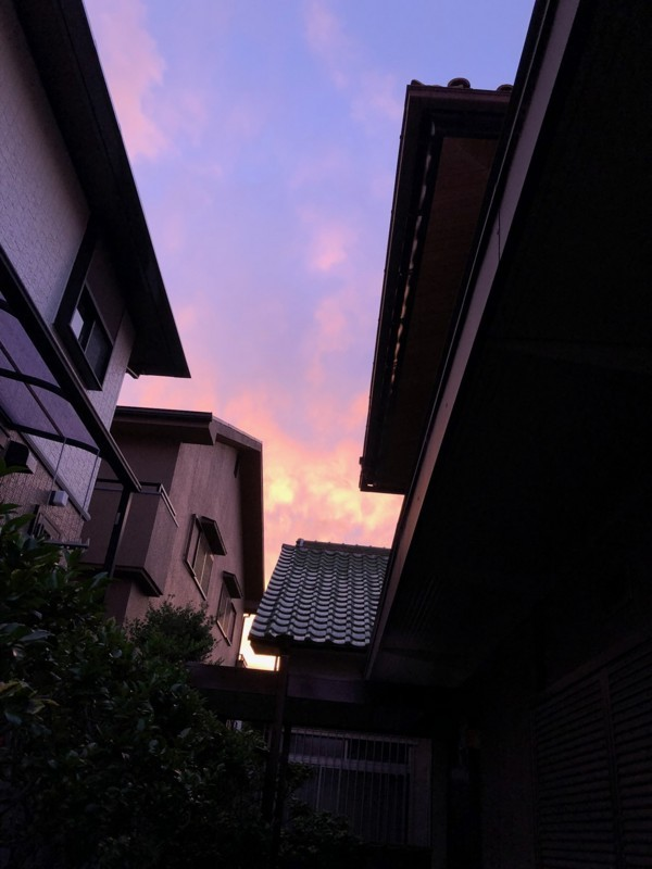 f:id:you_cats0712:20180728191213j:image