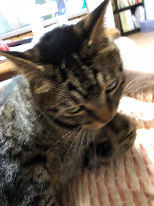 f:id:you_cats0712:20181211000346j:image