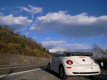 081019_beetle6
