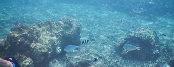 吉野海岸の透き通った海中で見る魚影