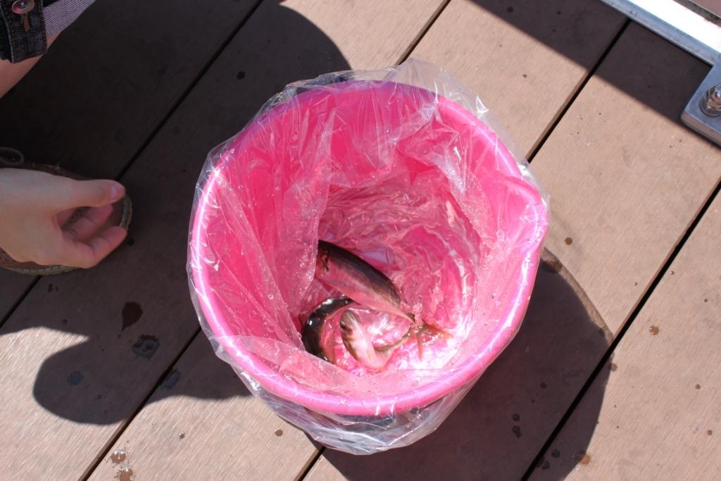 アジを釣りました