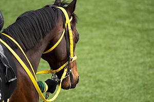 馬の体調を知るイメージ
