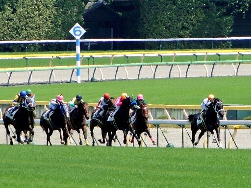 2/25の狙い馬|軸馬予想