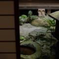 京 無名舎 坪庭