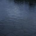 豊田市美術館 池
