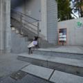 茅ヶ崎市美術館 犬