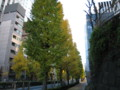[紅葉]御茶ノ水の銀杏並木