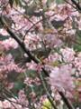 [鳥][花]