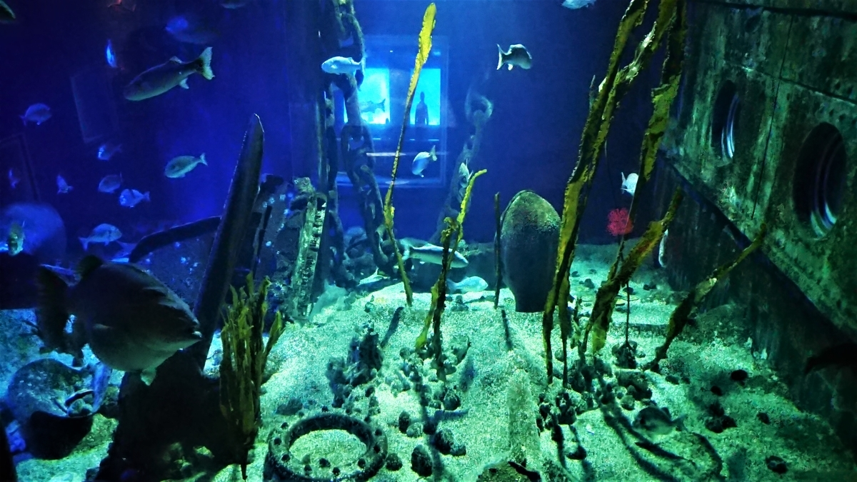 SEA LIFE Val d'Europe