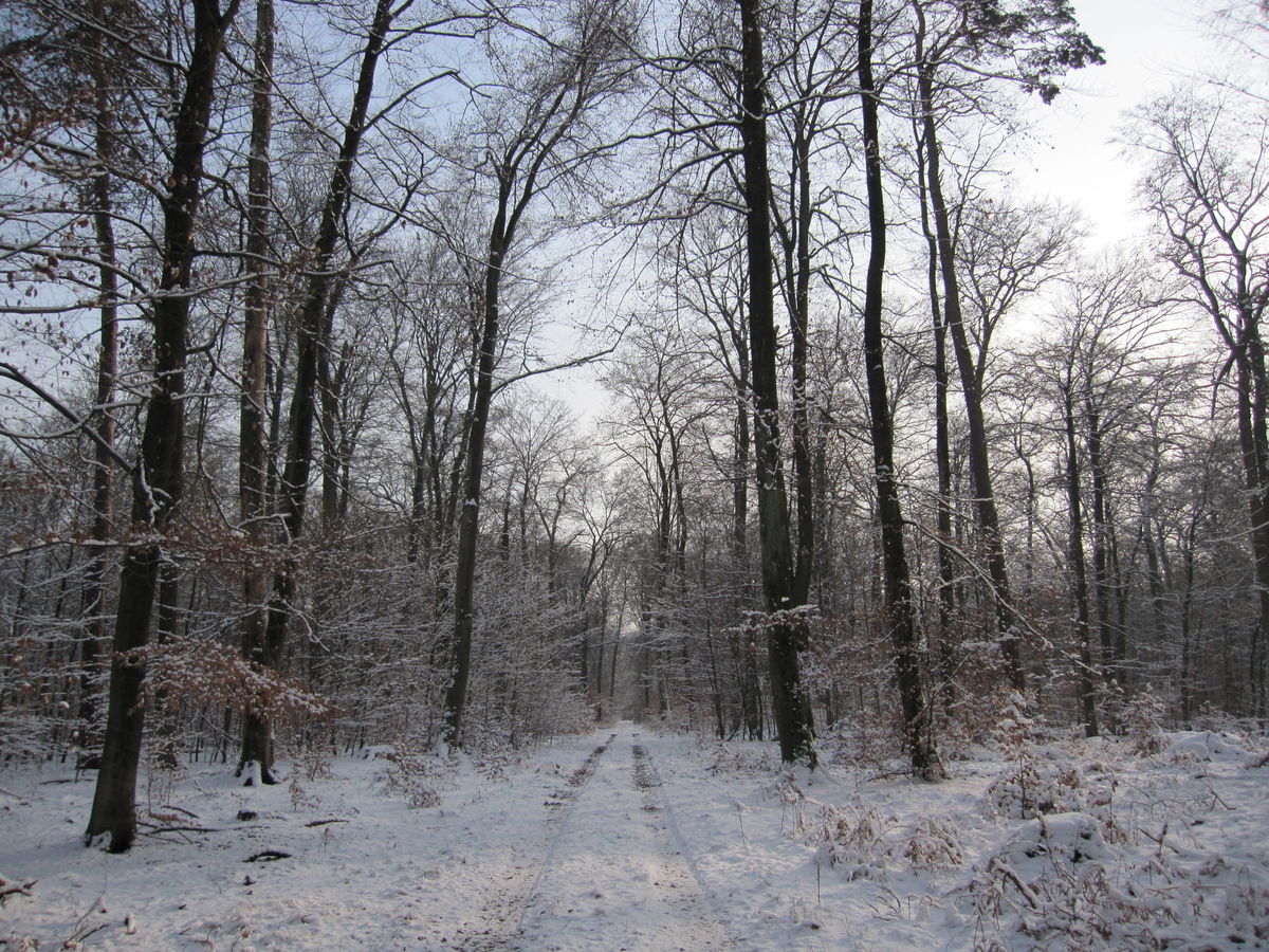 ドイツ 冬の森