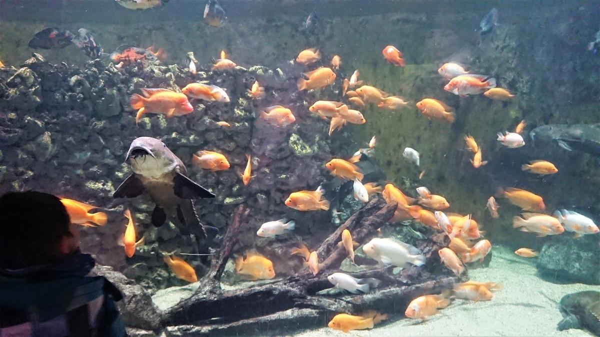 Budapest Zoo & Botanical Garden