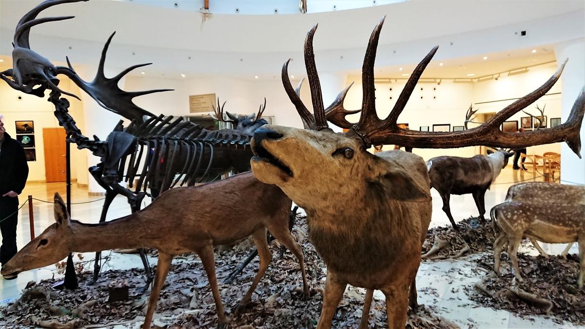 Magyar Természettudományi Múzeum ハンガリー自然史博物館