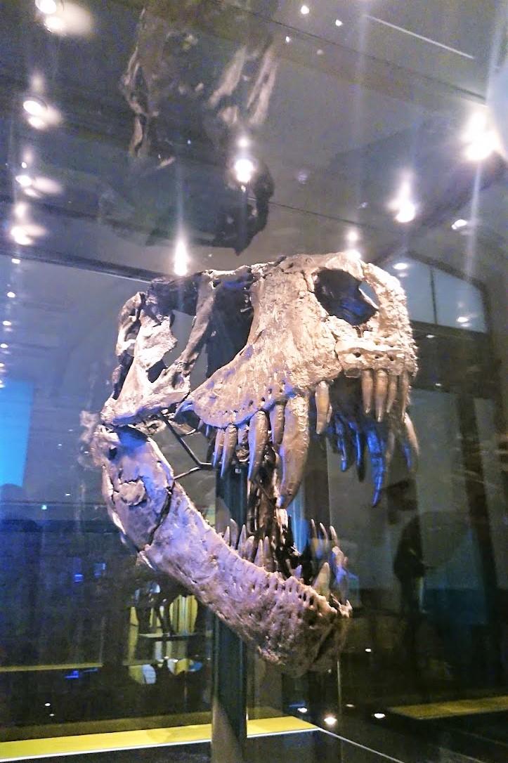 ベルリン自然史博物館『Museum für Naturkunde』