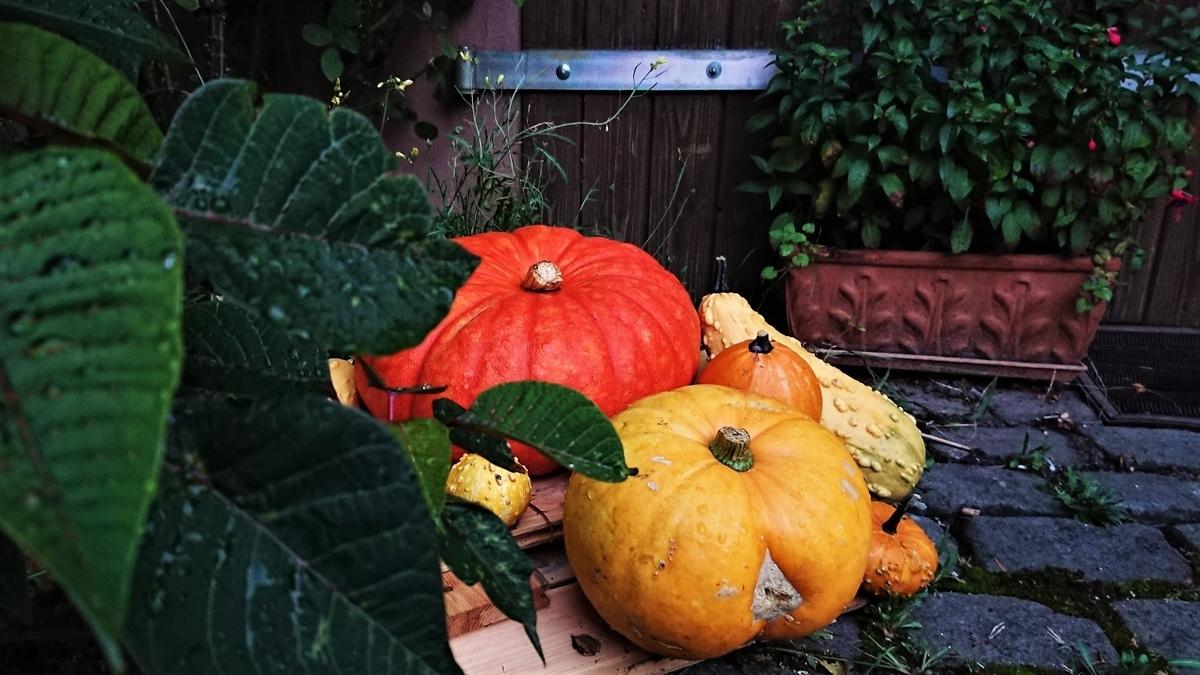 パンプキン かぼちゃ ハロウィン 秋