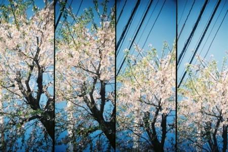 f:id:AkikoHORII:20090428205239j:image