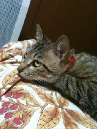 f:id:AkikoHORII:20100501170955p:image